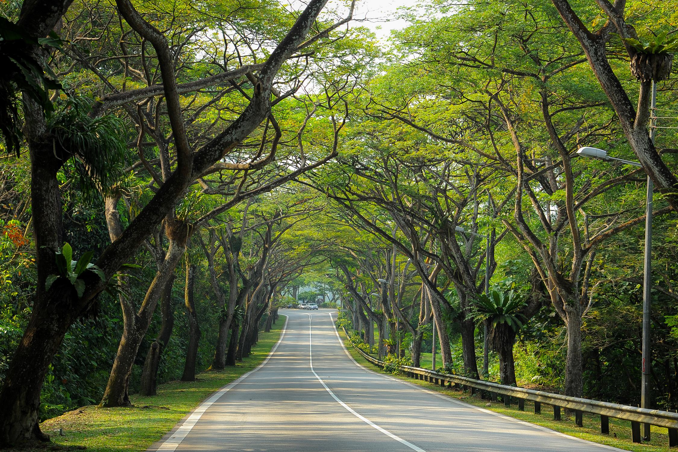 สิงคโปร์ ต้นไม้ พื้นที่สีเขียว