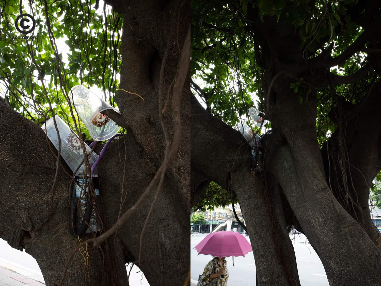 #photo essay #culture #ขยะ #ต้นไม้ #ผิดที่ผิดทาง #ถังขยะ