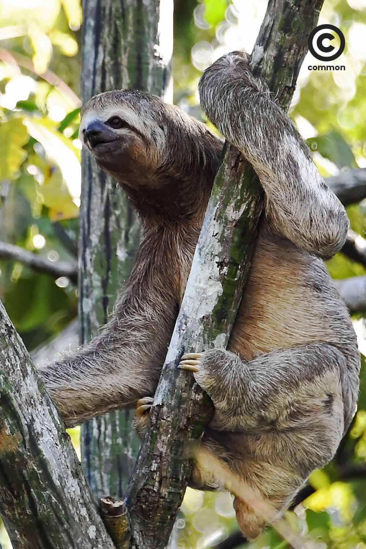 ช้า เล็ก เรียบง่าย สลอธ วิถีชีวิต เคโบะ โออิวะ Keibo Oiwa the Sloth Club