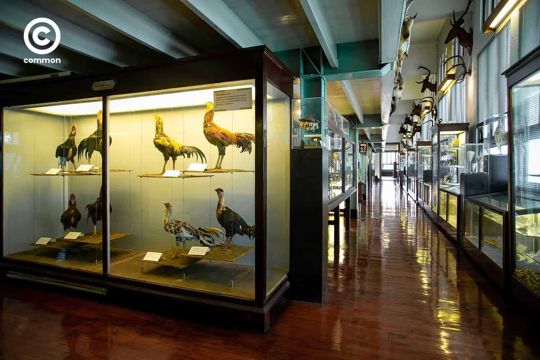 cu museum