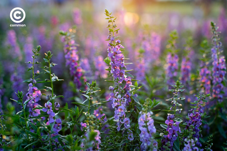 #photoessay #สวนหลวงร9 #ดอกไม้ #CULTURE #พรรณไม้งามอร่ามสวนหลวงร9 #common