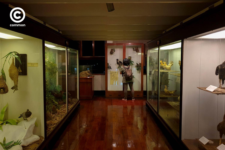 ืnight museum 1