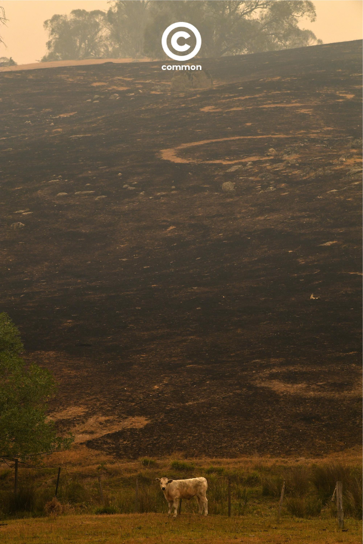 ิีbushfire australia 1