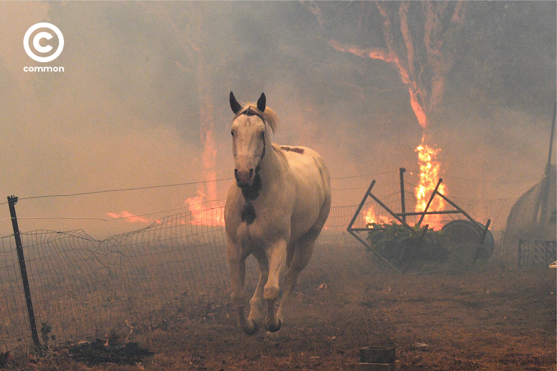ิีbushfire australia