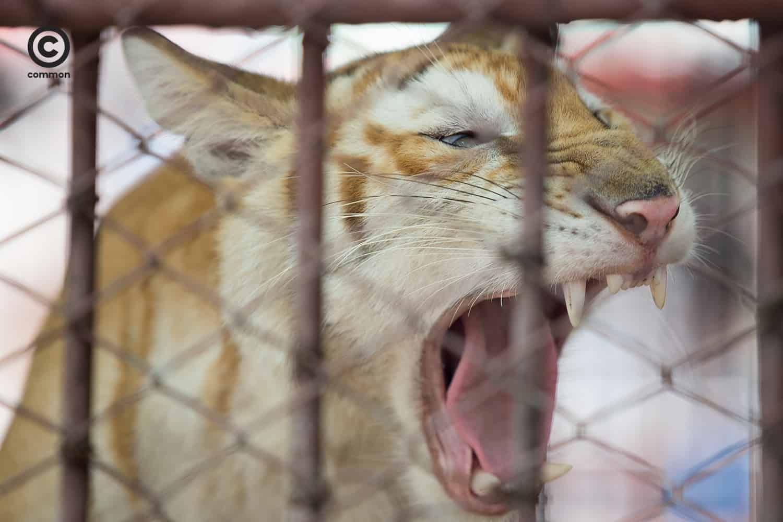 #photoessay #สวนสัตว์ #COVID19 #WORLD #becommon