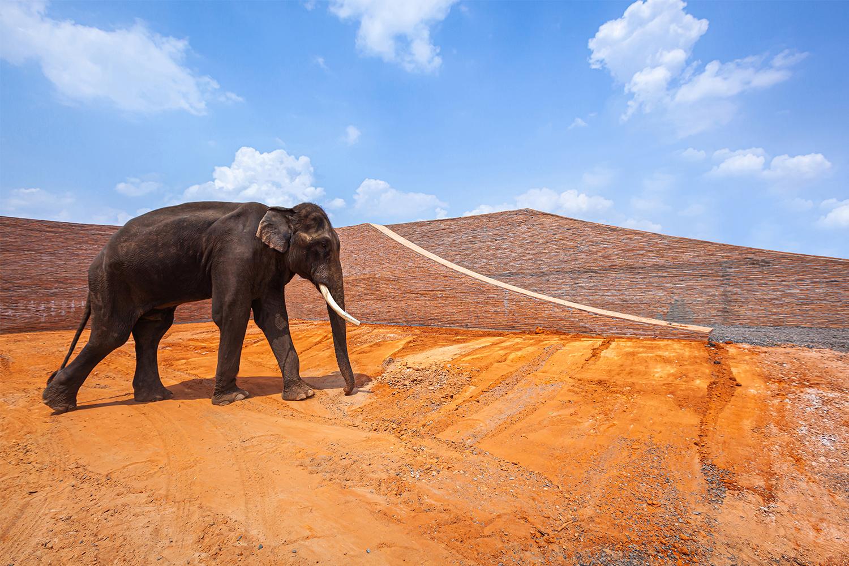 Surin Elephant World