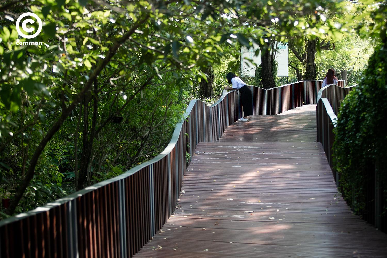 #PHOTOESSAY #สะพานคลื่นนก #becommon