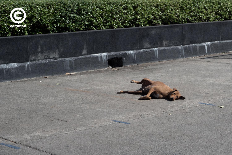 #PHOTOESSAY #สุนัข #อากาศหนาว #becommon