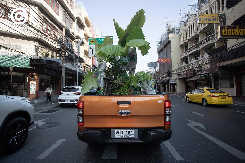 #PHOTOESSAY #ต้นไม้ #becommon