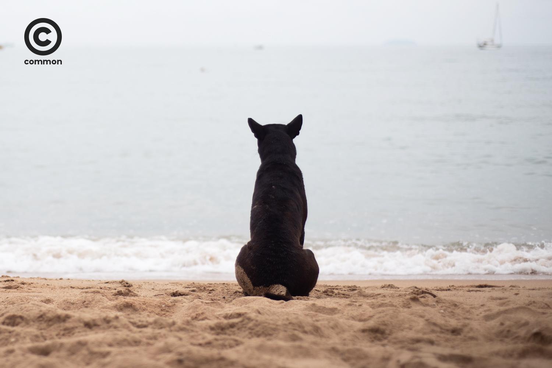 #PHOTOESSAY #หมาทะเล #becommon