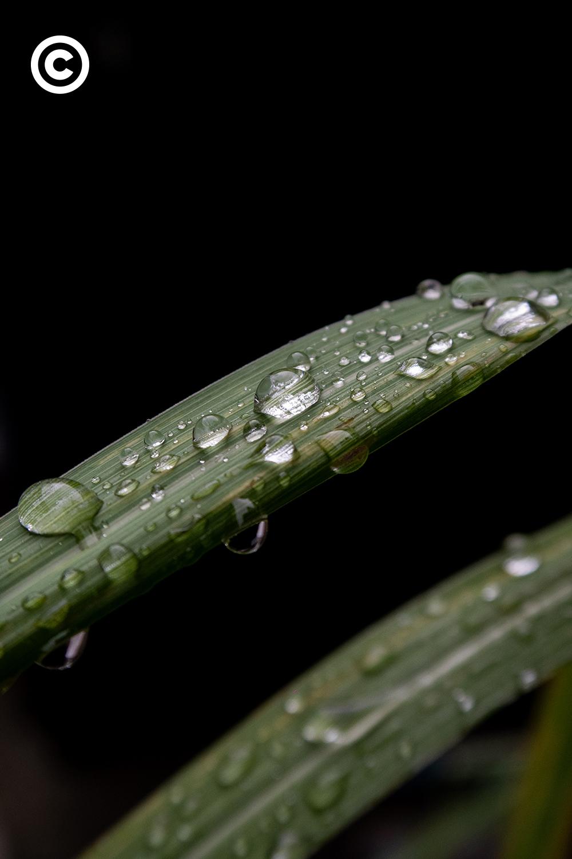 #PHOTOESSAY #ต้นไม้ #ฤดูฝน #becommon